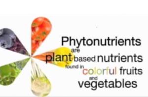 phyto21